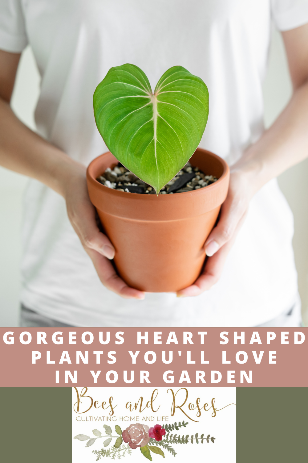 Beesandroses.com is the place to go to find helpful gardening tips. Learn what to grow and how to grow it! Make your garden a little sweeter by adding some of these heart shaped plants you'll fall in love with!