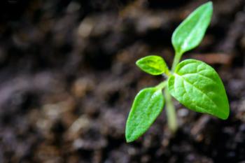 Should You Go for Seeding or Seedling