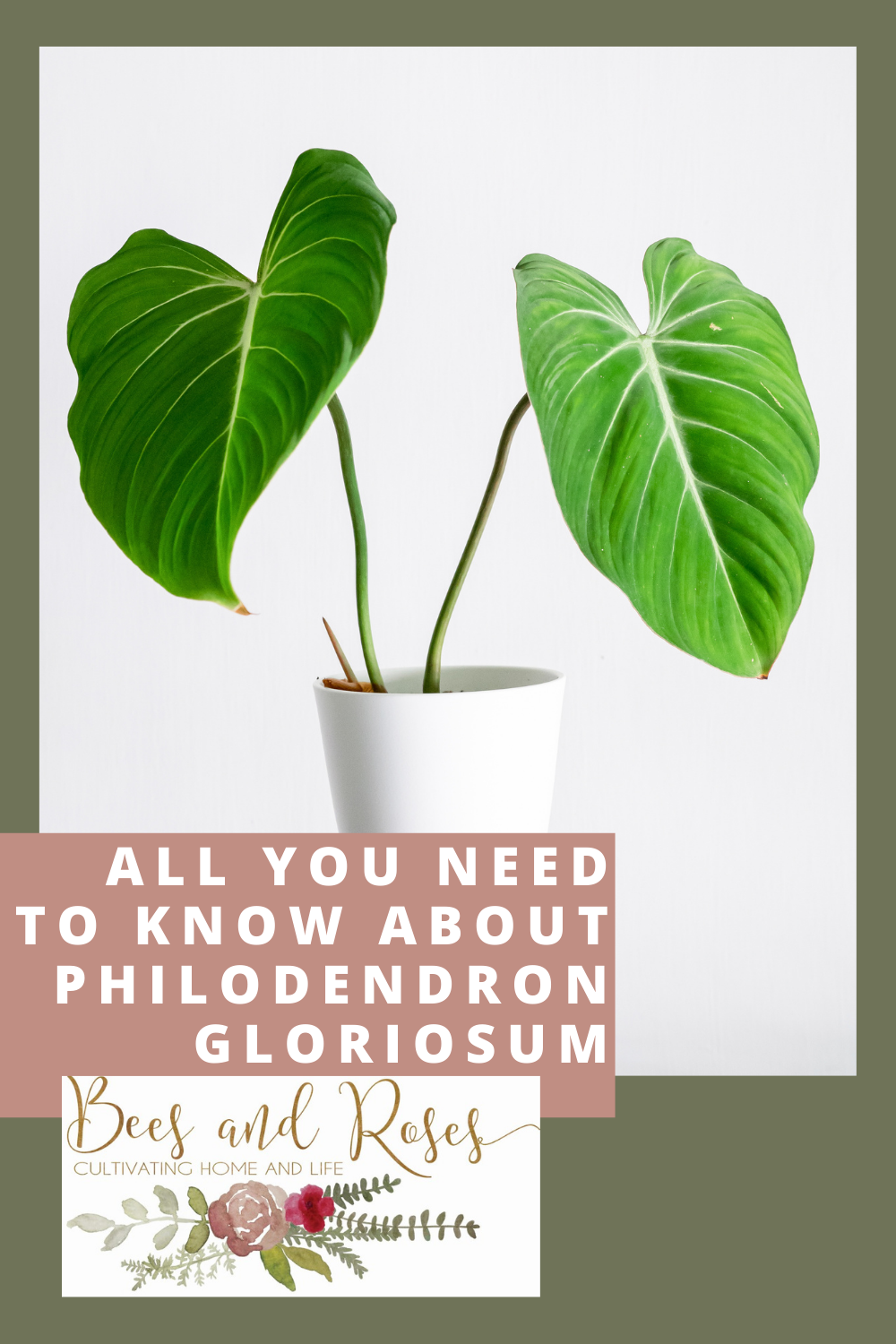 Beesandroses.com makes gardening accessible to people of all skill levels! Find out what you should be growing and how to let your plants thrive! Check out all you need to know before growing philodendron gloriosum!