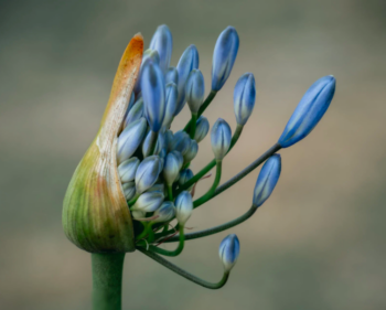 Blue flower – weird flowers