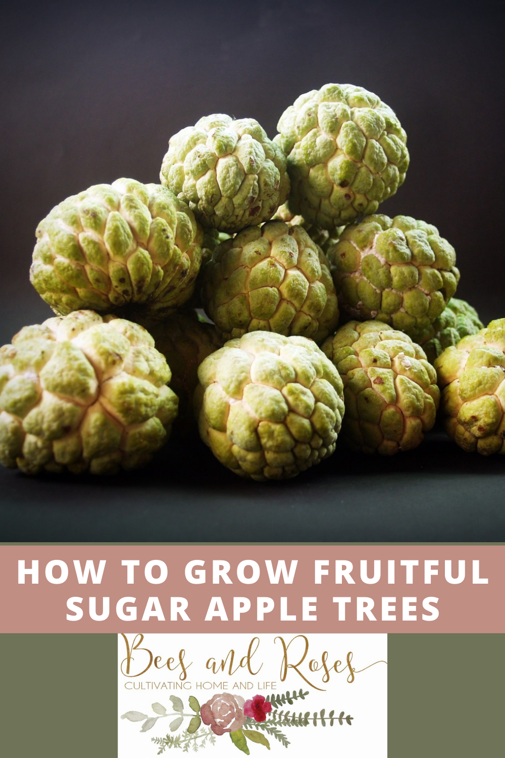 Beesandroses.com makes gardening accessible to people of all skill levels! Find out what you should be growing and how to let your plants thrive! Check out all you need to know before growing sugar apple trees!