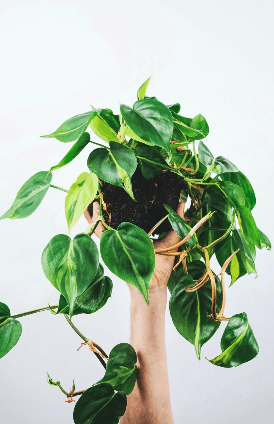 Tree hugging plants