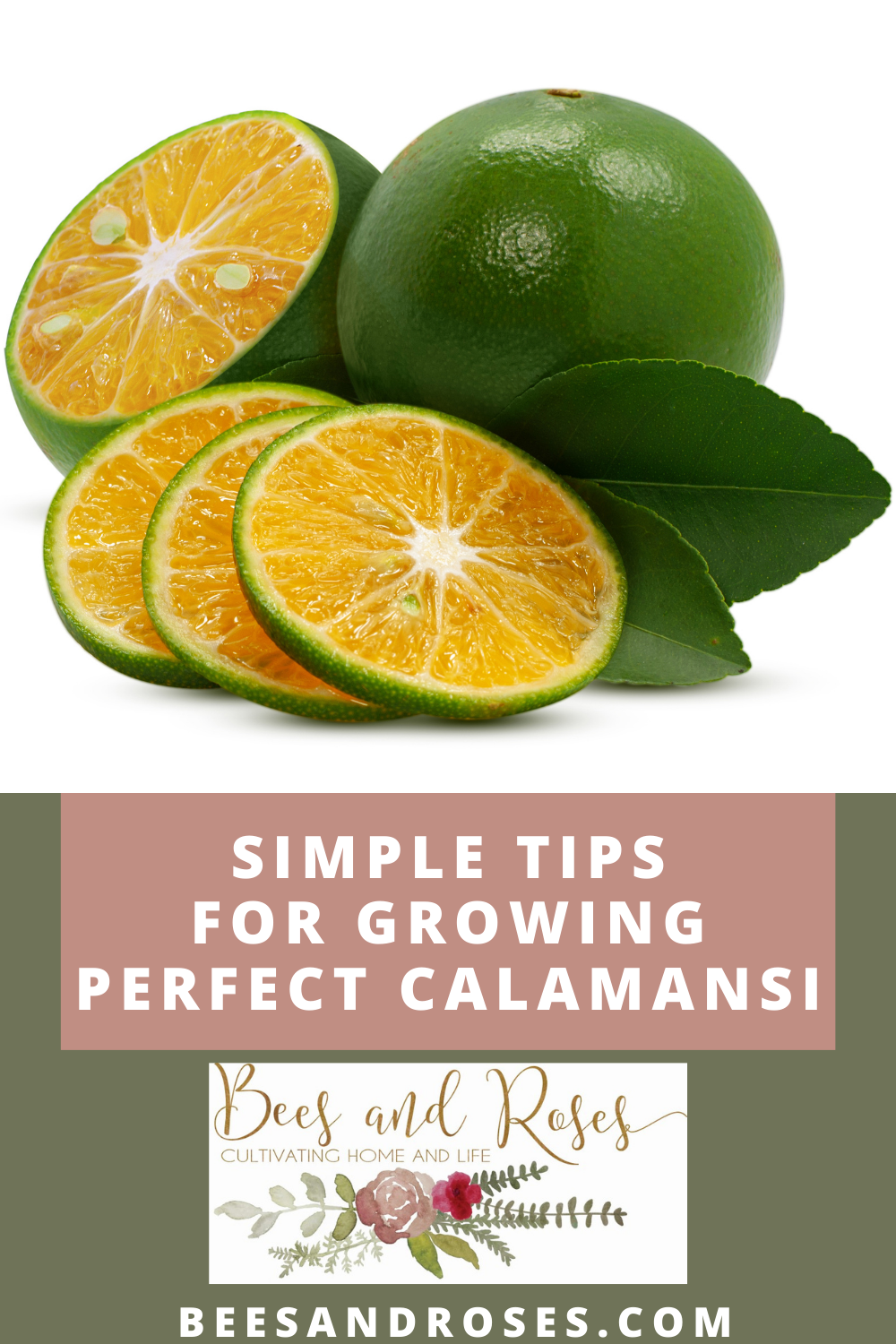 Beesandroses.com makes gardening accessible to people of all skill levels! Find out what you should be growing and how to let your plants thrive! Check out all you need to know before growing Calamansi fruits!