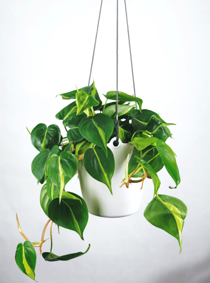 A guide on how to take care of your plants